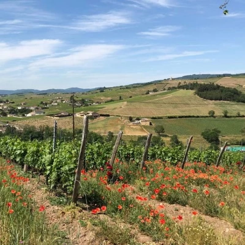 Balade dans les vignes au Château de Poncié
