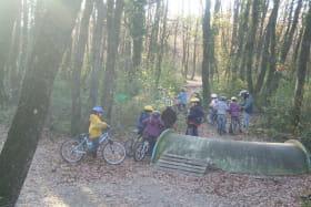 Activité en forêt
