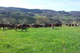 La ferme de l'Amélie
