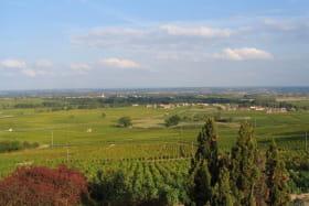 Gîte La Côte du Py à Villié-Morgon (Rhône - Beaujolais) : vue sur le vignoble, la vallée de la Saône.
