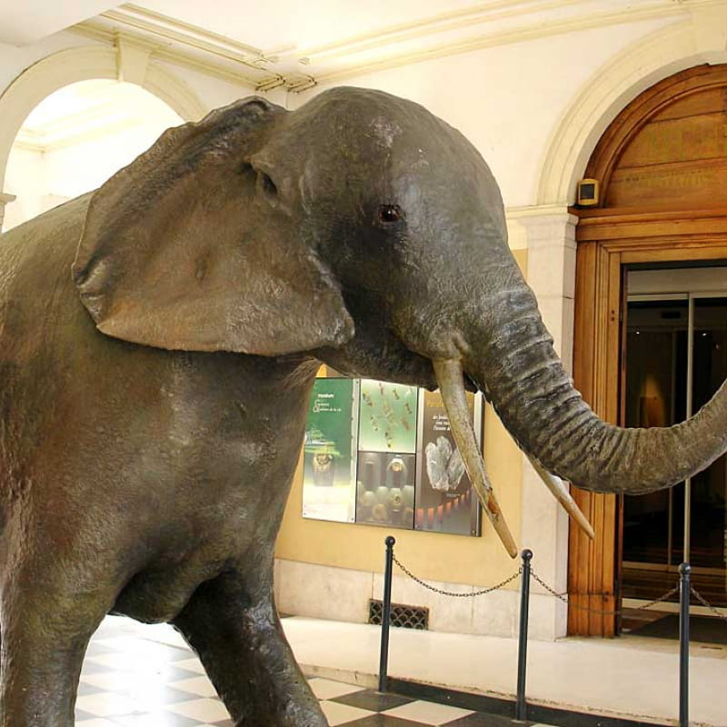 Muséum d'Histoire Naturelle