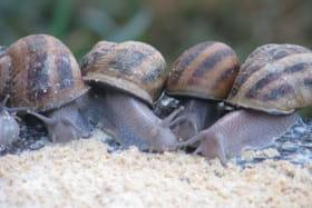 Le Jardin aux Escargots