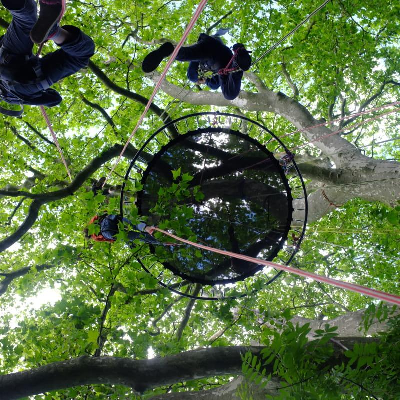 Hêtre en Forez - grimpe d'arbres