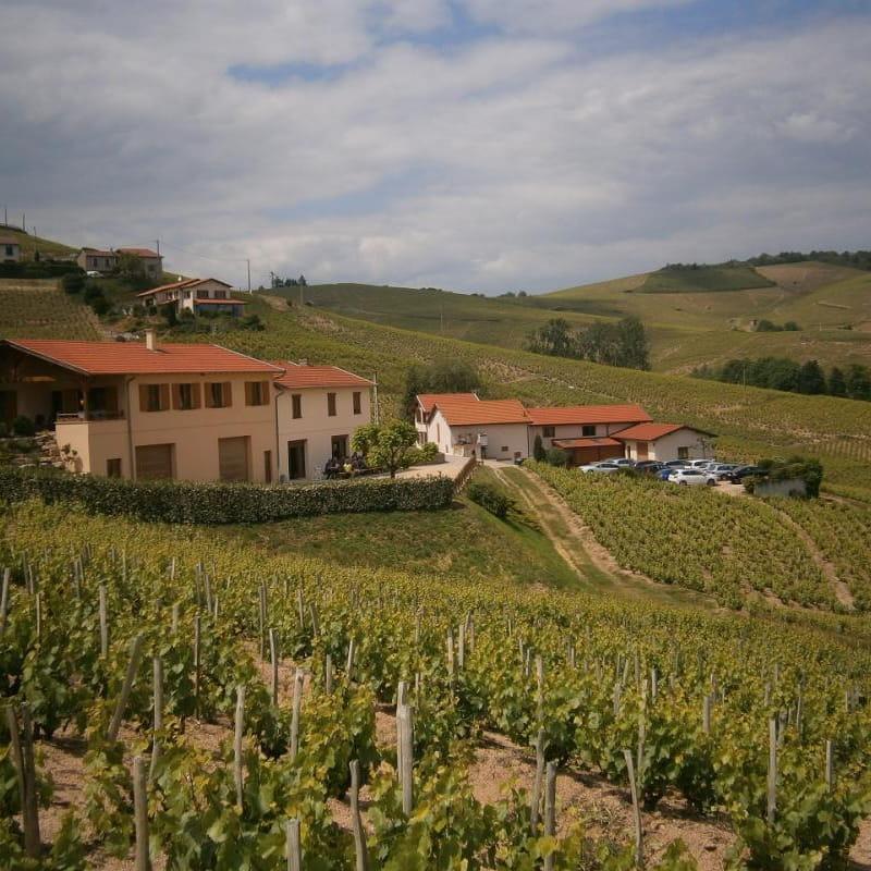 Les 3 gîtes du vignoble Aufranc à Fleurie (Rhône - Beaujolais des crus - vignoble)