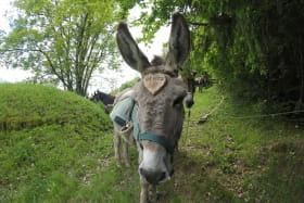Randonnée âne - Activité - Dominique Beaufaron