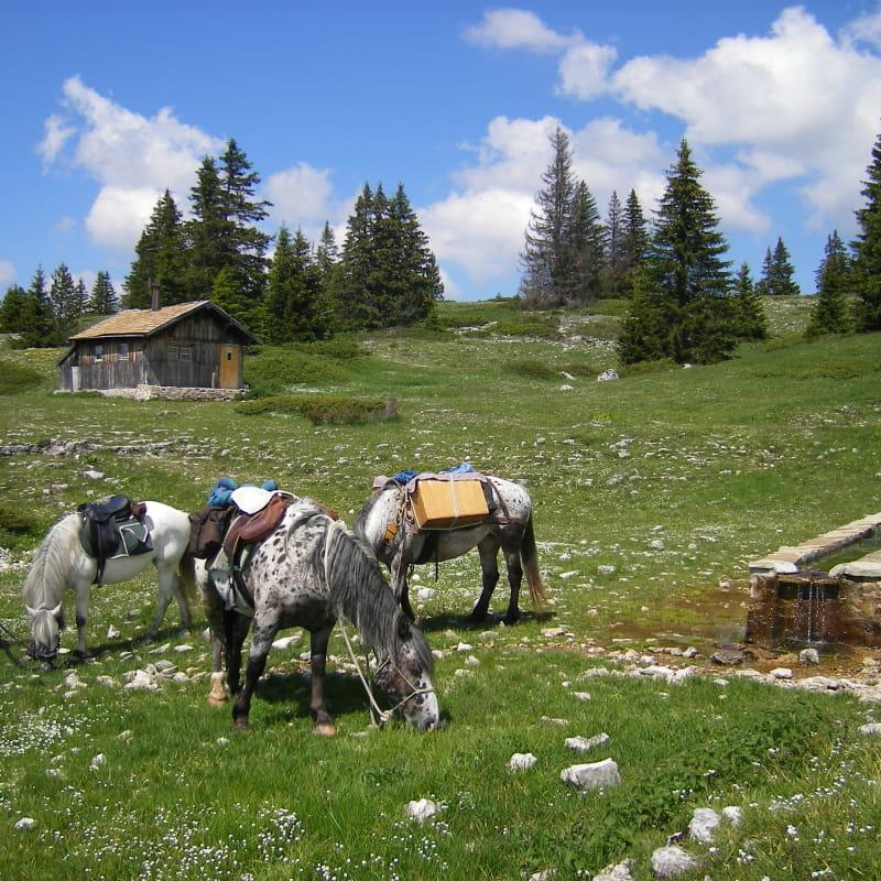Equitation avec Parole de Cheval