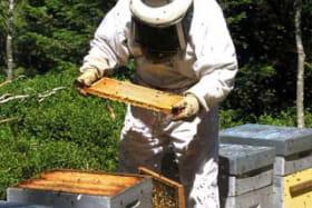Les ruchers nomades