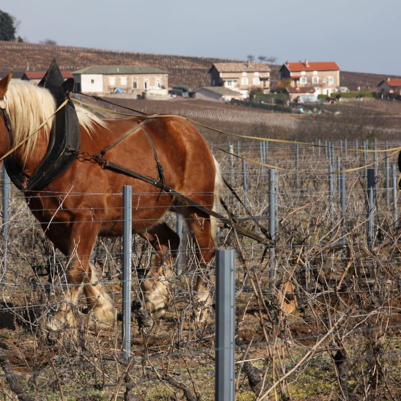 Les vins Jean-Pierre Teissèdre - Domaine des Grandes Bruyères