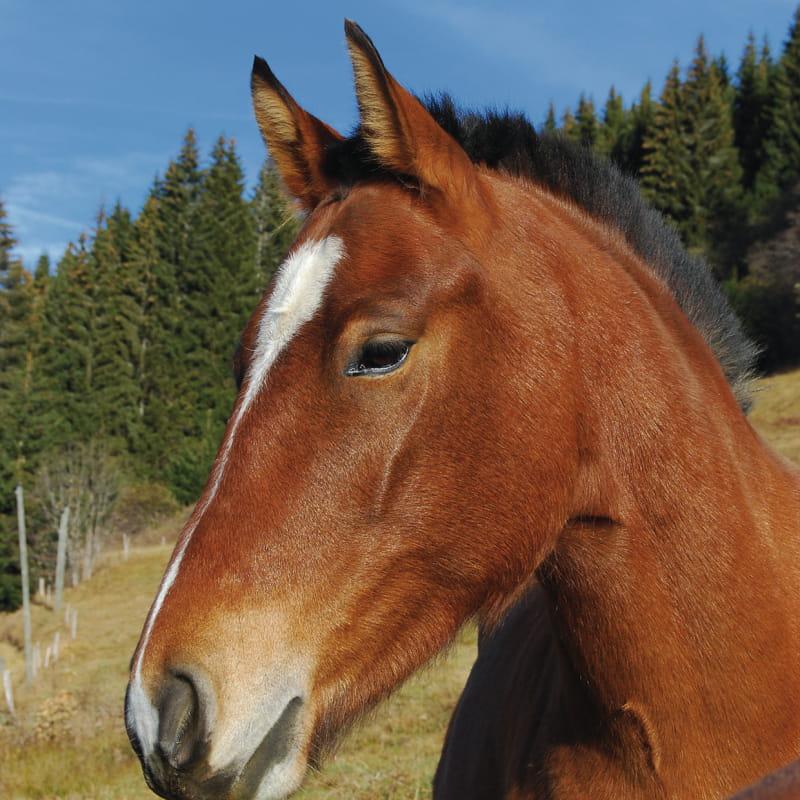 Stage de cheval et de poneys