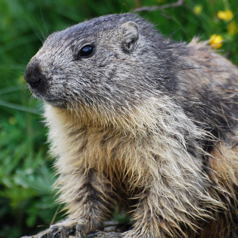 petit dej face aux marmottes