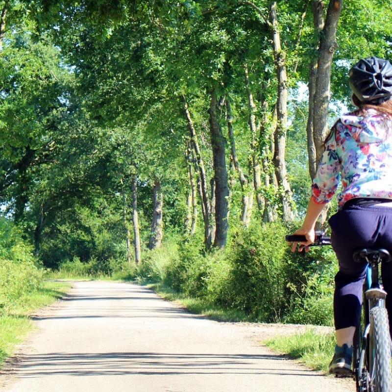 Vélo sur route ombragée