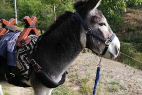 Randonnée avec ânes- Brouss'Ane