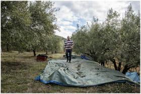 Récolte - Domaine Piallat