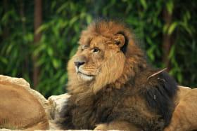 Parc Zoologique Le Domaine des Fauves