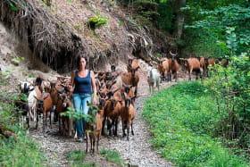 Le Clos aux chèvres