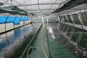 Bassins de production