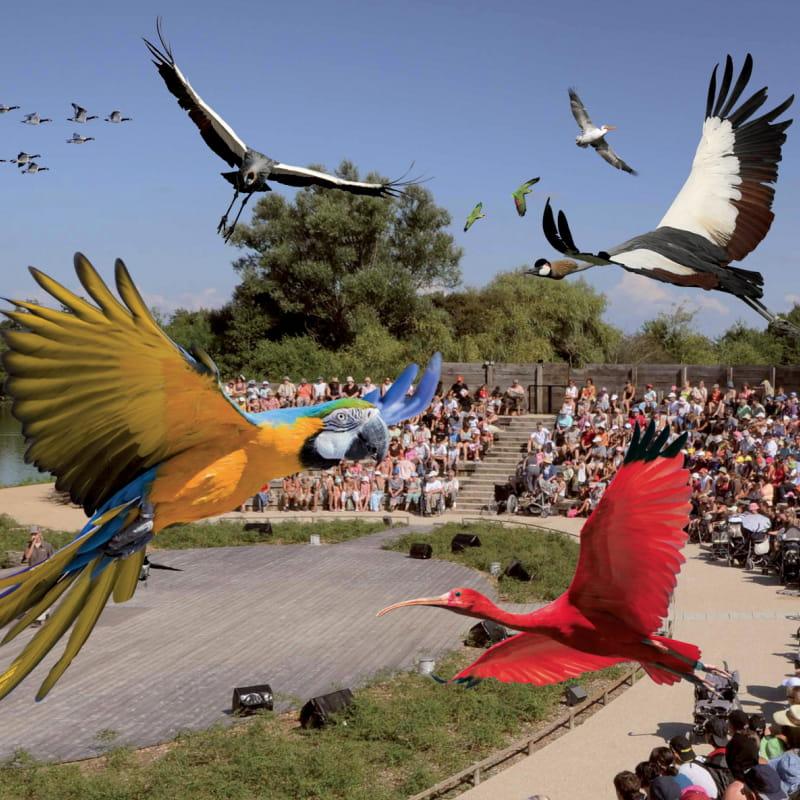 Spectacle des oiseaux en vol - Parc des Oiseaux de Villars les Dombes