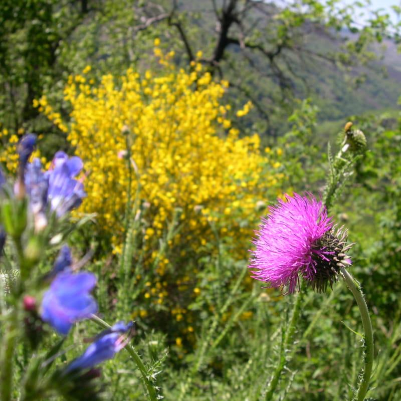 Jardin botanique de la Grangeasse