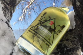 bouteille dans arbre