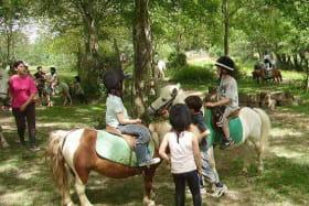 Stage d'équitation : découverte et loisir