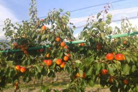 Les Fruits d'une Passion