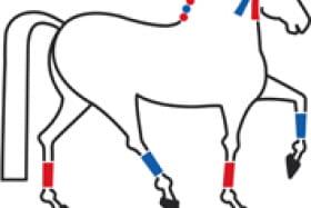 Activités équestres au Haras de Bressac