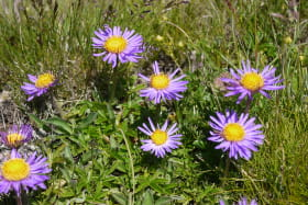 photo observation flore