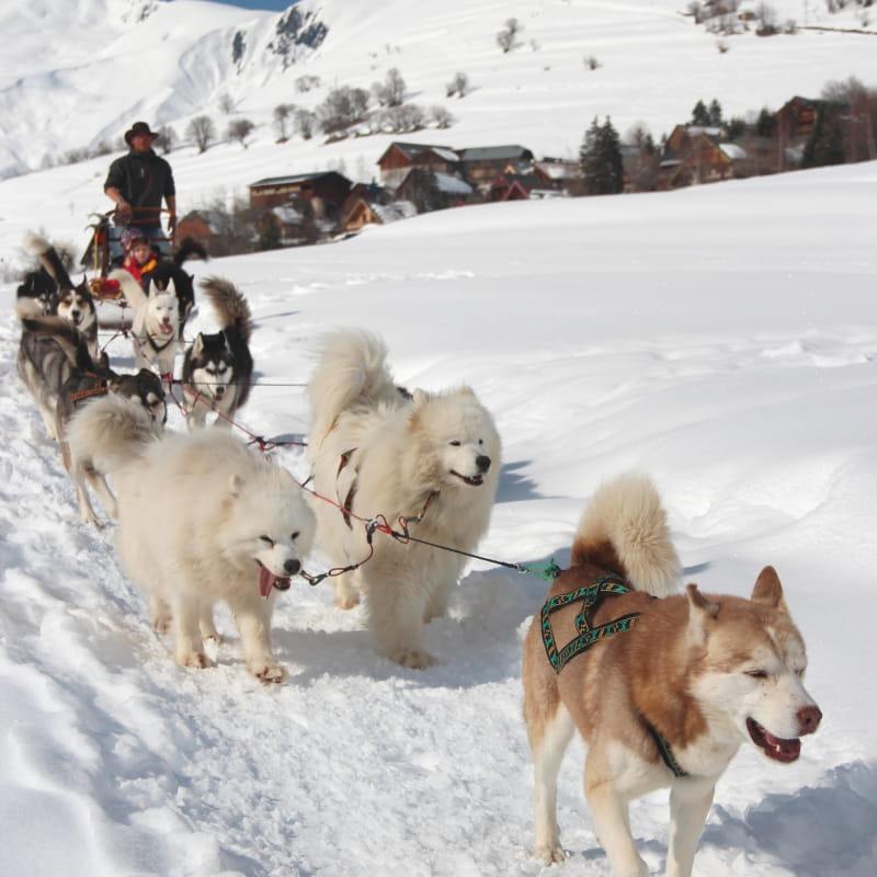 Balade en traineau à chiens à Albiez-Montrond