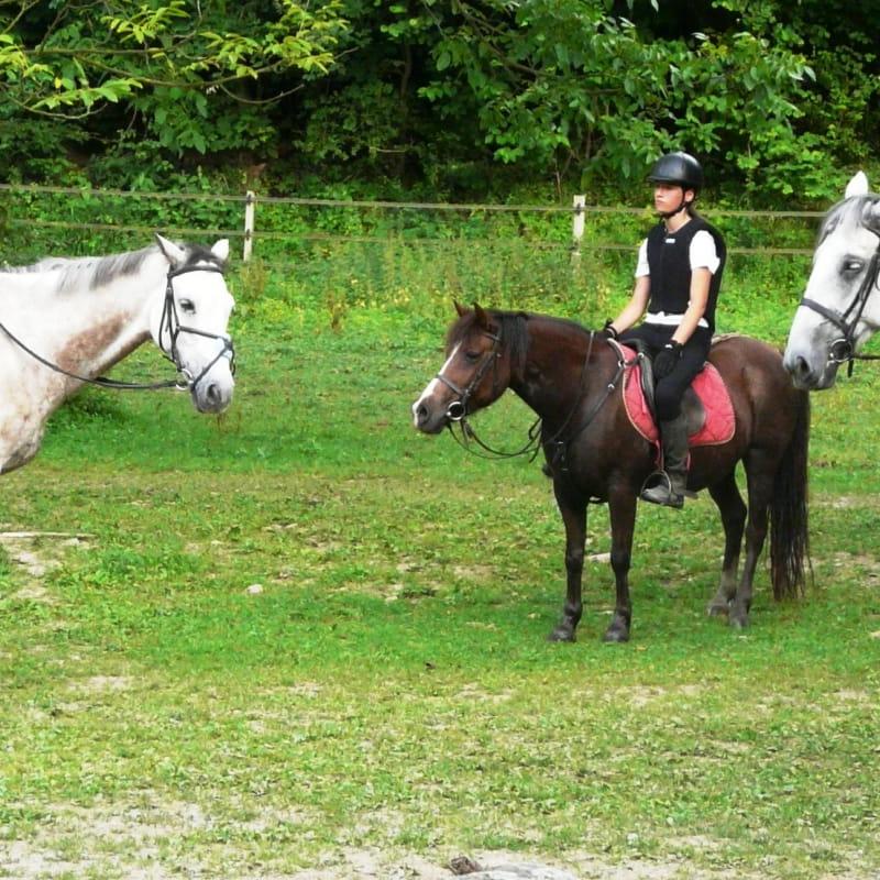L'accueil de groupe au Centre Equestre de Vienne le Couzon