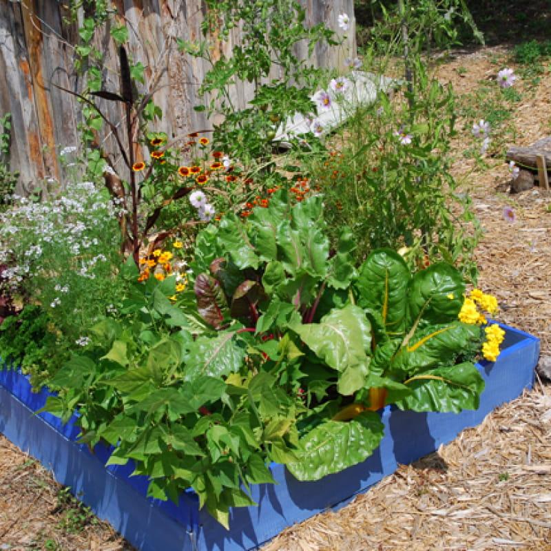 Stage Terre Vivante : Aménager mon petit jardin