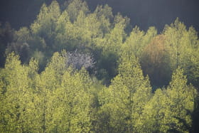 Gîte du Grand Peisselay à VALSONNE (Rhône - Beaujolais Vert) : l'environnement.