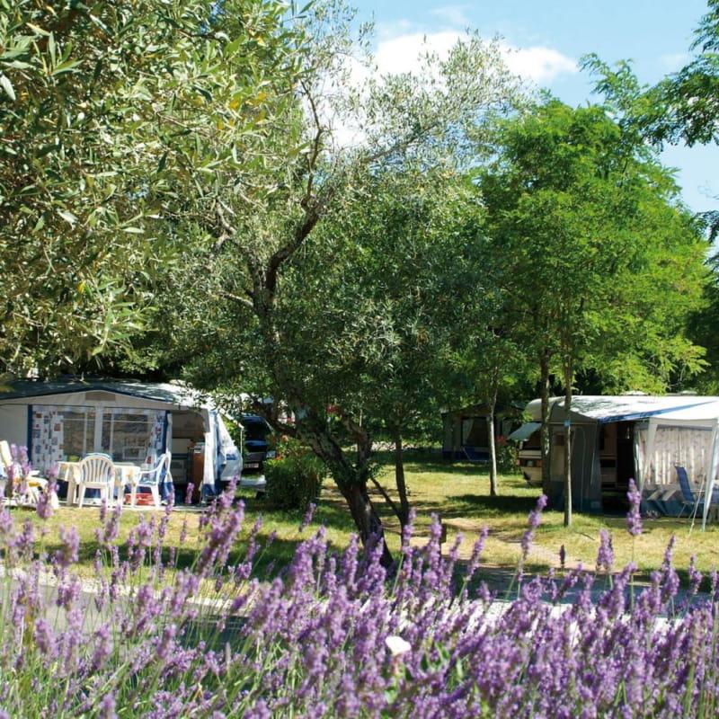 Sites et Paysages Camping le Petit Bois