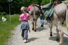 Randonnée avec les ânes en groupe