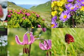 Randonnée observation de la faune et de la flore