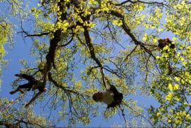 Sambala et Baobab