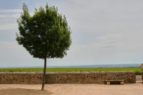 CHARVET - Gîte de groupe l'Etape Vigneronne à FLEURIE