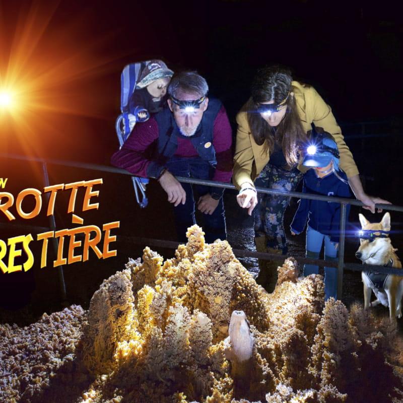 Aven Grotte Forestière.