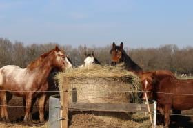 Les Cavaliers d'Epona