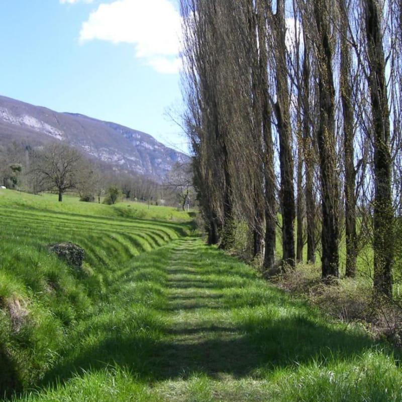 Le Chemin de Saint Jacques de Compostelle - GR 65