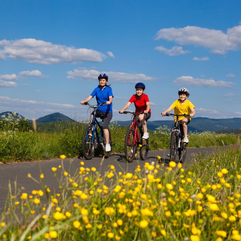 Prolynx Sports, balades en VTT - vélos électriques