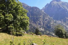 GAEC Chèvrerie de l'Eterlou - La ferme du Rivier - Eleveurs de chèvres et vaches et brebis laitières
