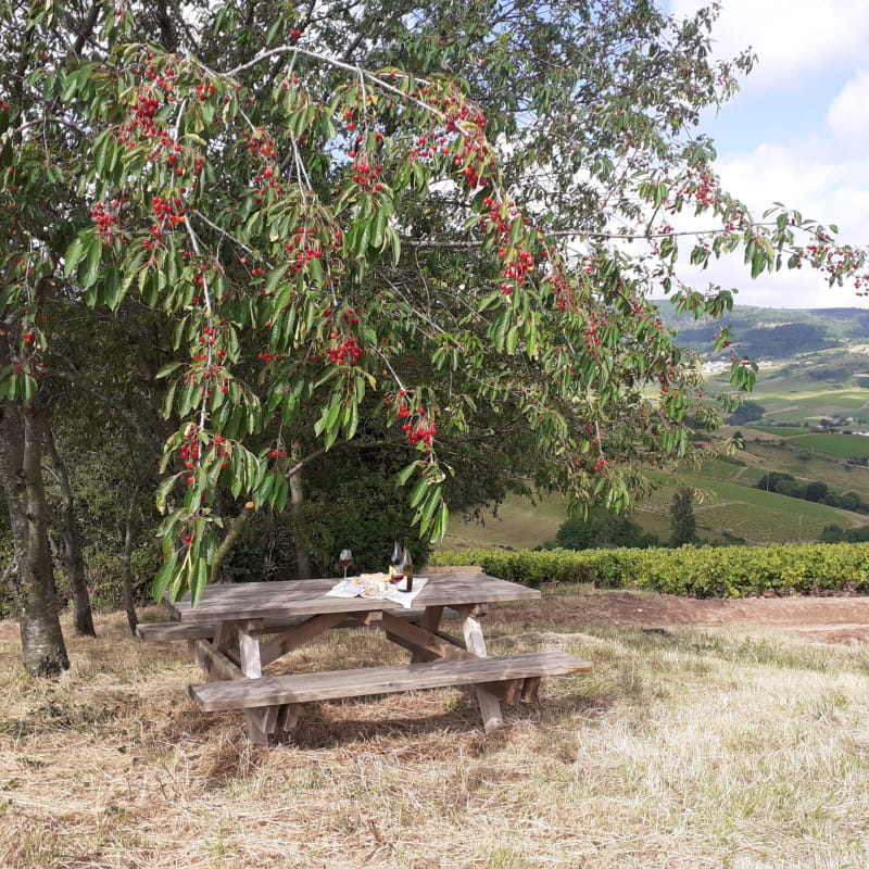 Pique-nique dans les vignes : Formule simplicité