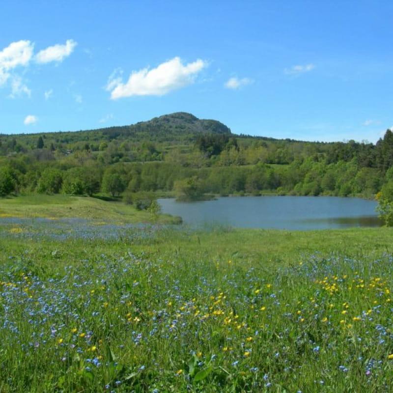 les étangs des Moulins du Bouchat