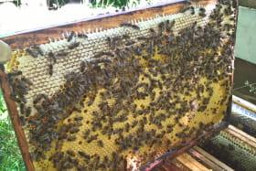 Rucher pédagogique : A la cime du rucher
