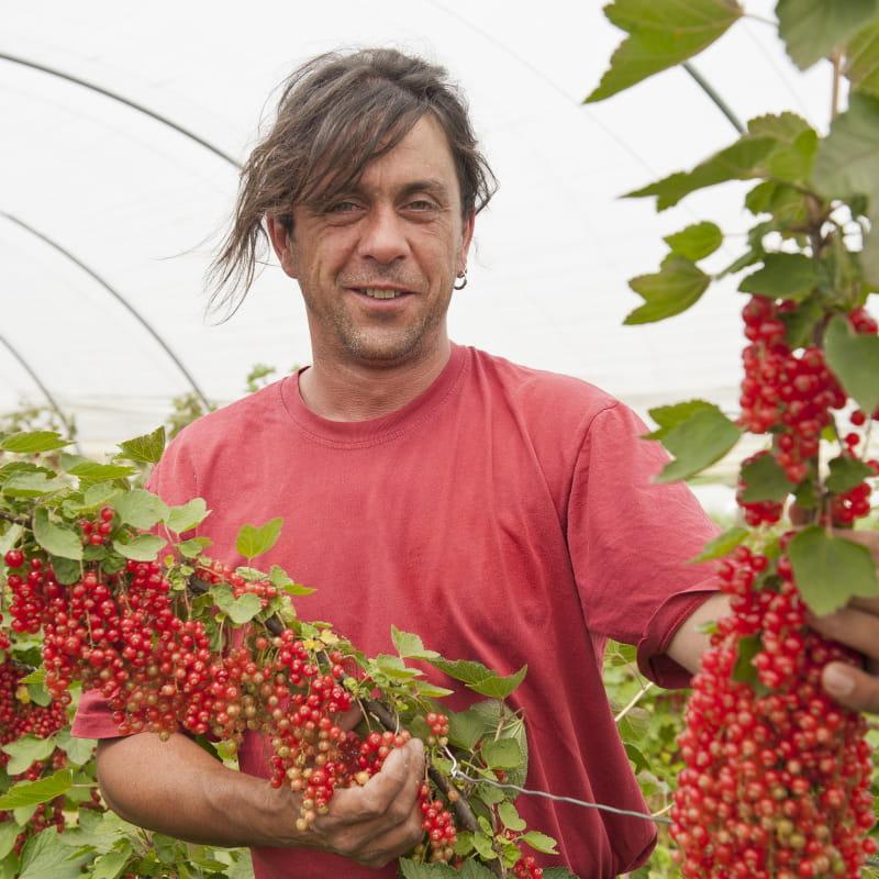 Pascal Fournel Producteur Fruits Rouges