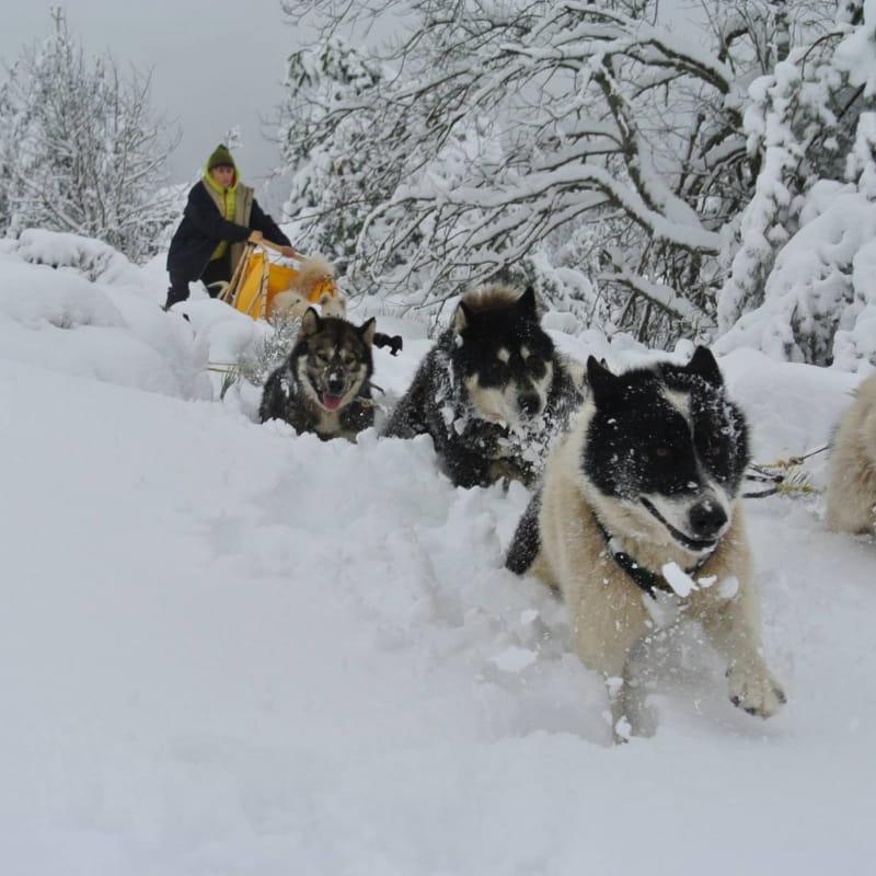 Randonnée en chiens de traineaux _ La Vallée d'Amarok