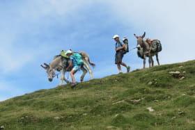 Randonnées accompagnées avec les ânes