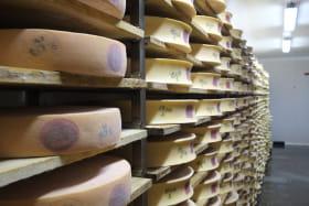 Fromages en cours de production